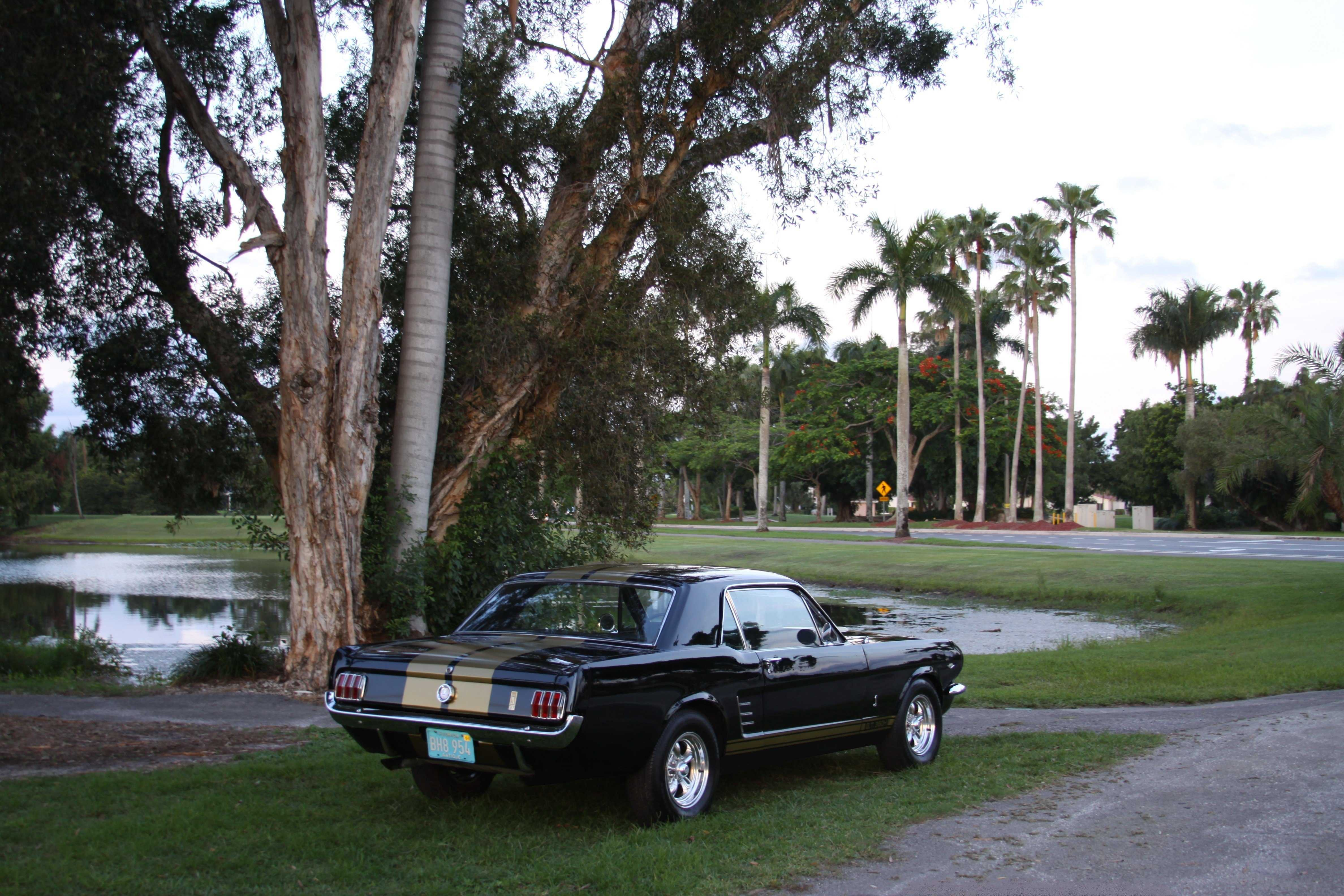 1966 Ford Mustang for sale in Pembroke Pines FL